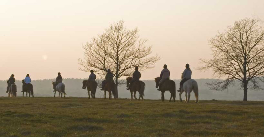 Some riders on horseback in moorland landscape with occasional trees at sunset with orange sky.